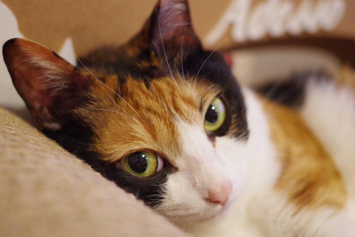 ヒロイン本人から「いじめ」をするよう脅迫されている悪役令嬢は、今日もしょんぼりと猫を愛でる