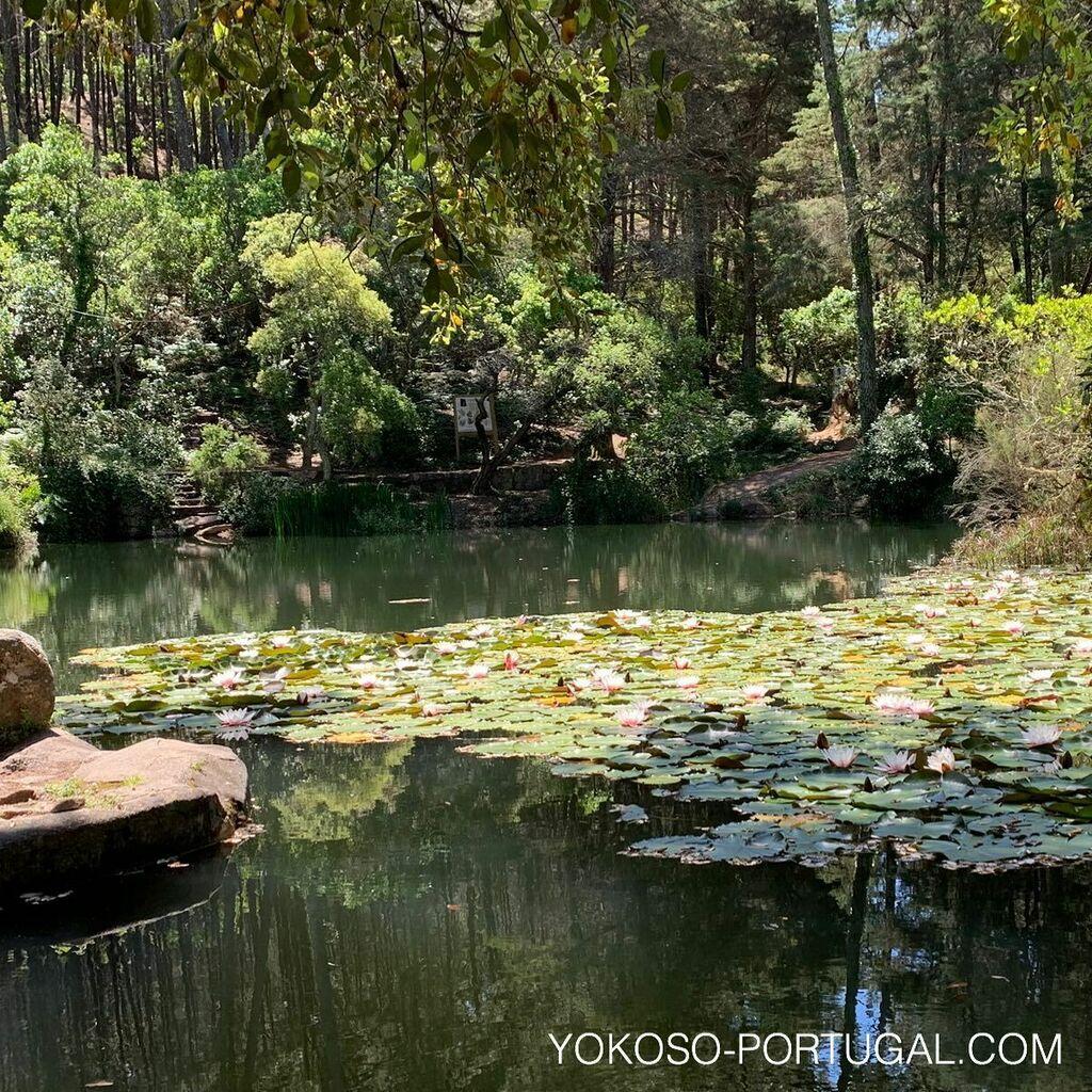 test ツイッターメディア - 世界遺産のシントラにある沼では、スイレン満開です。 #ポルトガル #シントラ https://t.co/xCbgshfLCg