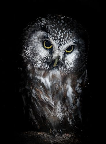 Owls #photos #animals #birds #owlspic.twitter.com/Z8DJuSZgNv
