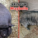 Image for the Tweet beginning: How amazing is Maybelle's transformation?