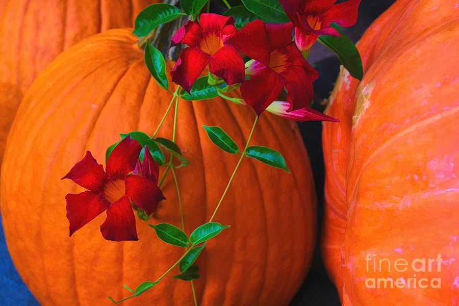 Red Cypress Vine And Pumpkins #Autumn #pumpkins #RedCypress #Dallas #Texas #Arboretum #DianaMarySharpton #FineArt #Fineartphotography #FineArtAmerica https://buff.ly/2MuyIQspic.twitter.com/r3t3zZdQwT
