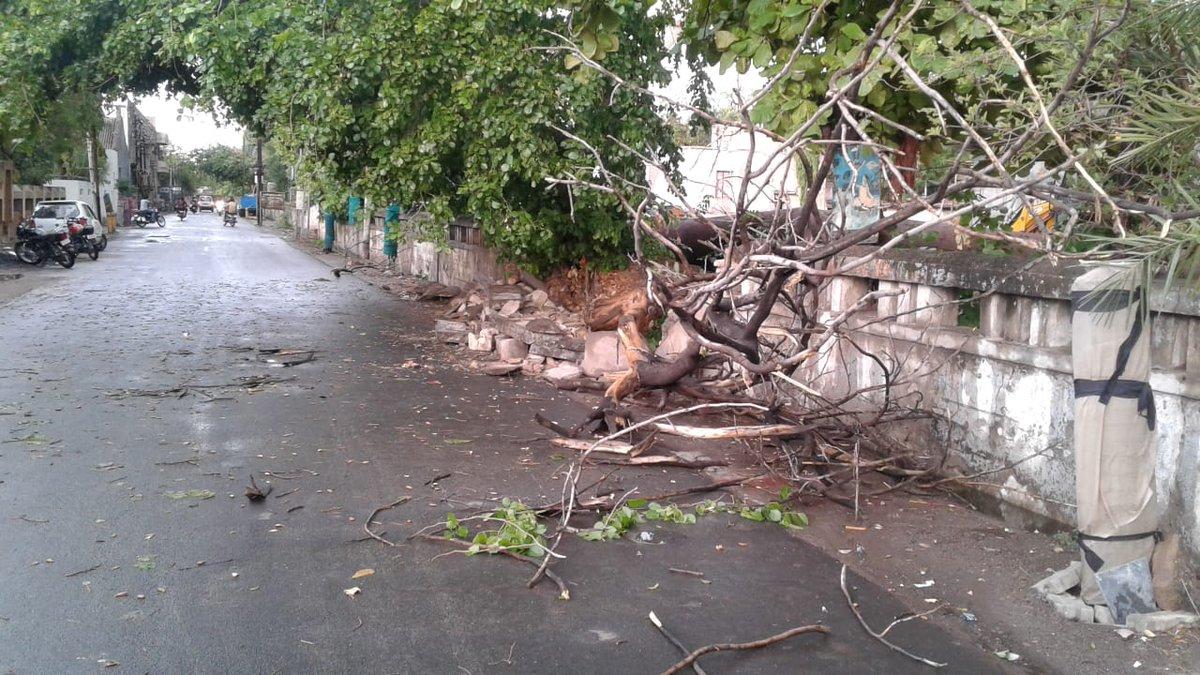 સુરેન્દ્રનગરમાં પવન સાથે વરસાદ થતાં રસ્તા પર વૃક્ષો ધરાશયી #Rainfall #Surendranagar #thunderstorm  #AIRPics: PTC Surendranagar Dinesh Parmar pic.twitter.com/0TaJKm9qeX