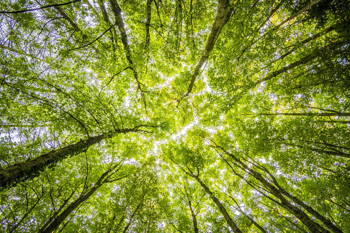 For most people, addressing climate change can feel overwhelming. Let's focus on the little things we can do to ensure #cleanair and healthy breathing outdoors. #WorldEnvironmentDay   https://allergyasthmanetwork.org/news/climate-change-what-you-can/…pic.twitter.com/9NbAuaPccY