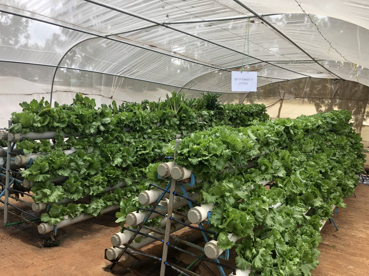 "GrowStream in Kenya. They call it the ""Set it & Forget it"" system, due to the minimal maintenance, low pressure requirements and no electrical components. #hydroponicsafrica #zerohunger #dripirrigation #agtech #verticalfarming #agricultura #foodsecurity https://t.co/2M0voCmT4i"