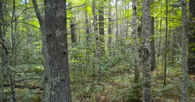 Return to 'deep woods' without walking far  #sawyercounty #wisconsin #hiking http://dld.bz/fq9aK pic.twitter.com/VLWUD6iGPn