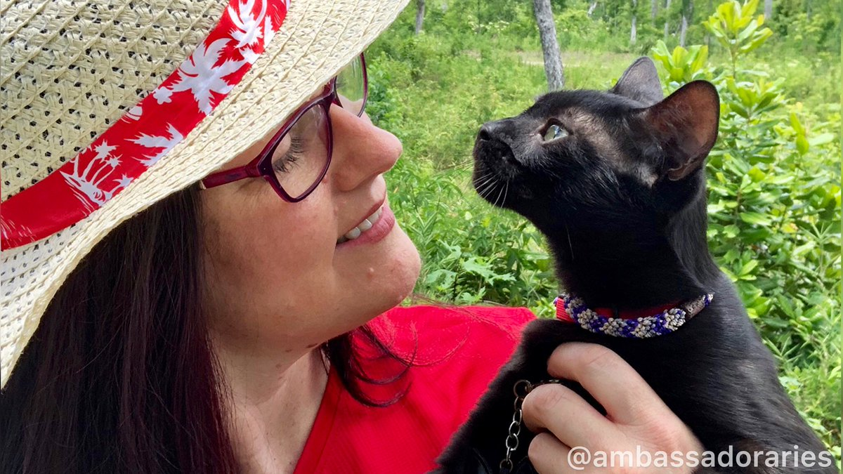 Yesterday was #nationalhugyourcatday and Mom was too busy to post. She said she would make amends by taking me somewhere special next week, but it would be a surprise. #cats #cat #catstagram #CatsOfTwitter #catlover #animals #pet #gato #ilovemycat #lovecats #kittypic.twitter.com/eGX7p4I9A7