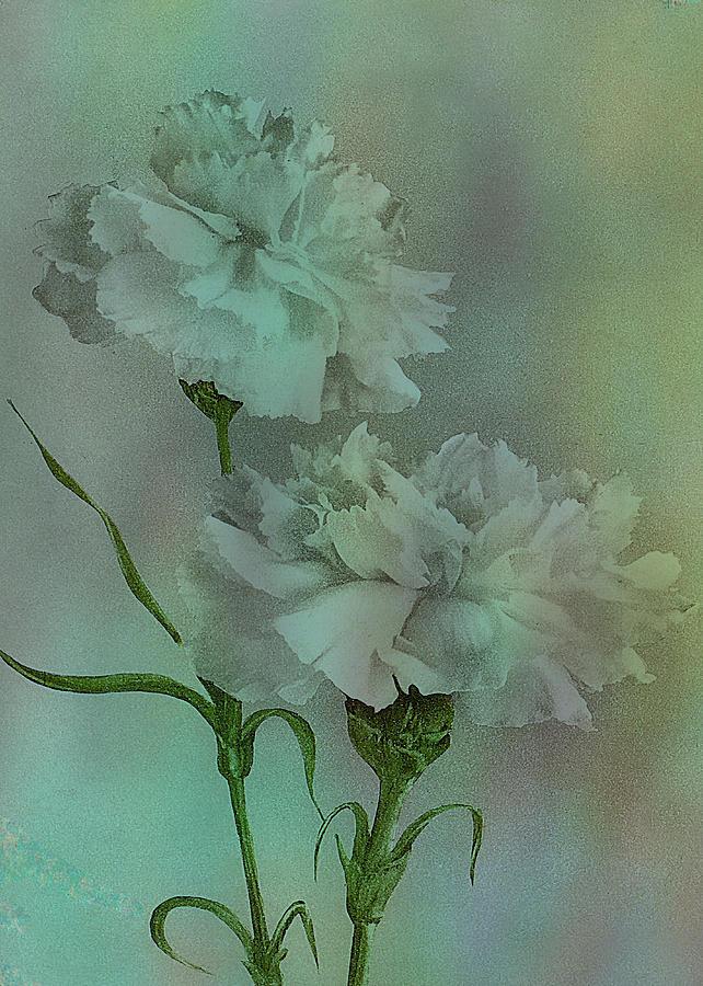Such Serviceable Flowers https://pixels.com/featured/such-serviceable-flowers-sarah-vernon.html… #stationery #art #homedecor #accessories #apparelpic.twitter.com/BgkSsElRIU