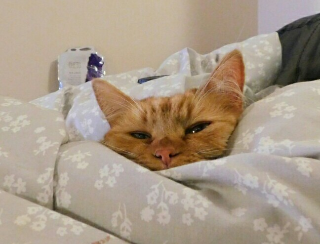 Night night everyone!!  I'm snug as a bug in a rug!   #CatsOfTwitter #cats #cute #Friday #Sweetdreamspic.twitter.com/pPgATsonQE