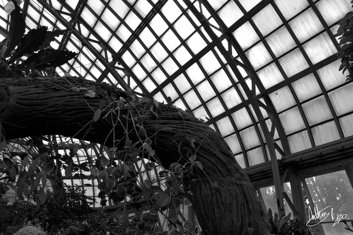 Garfield Park Conservatory #photography #blackandwhite #bw #blackandwhitephotography #bwphotography #noir #noiretblanc #highcontrast #monochrome #monochromatic #blancoynegro #Chicago #nature #naturephotography #plant #plantphotography #garfieldparkconservatory https://t.co/hzl5FFcsgA