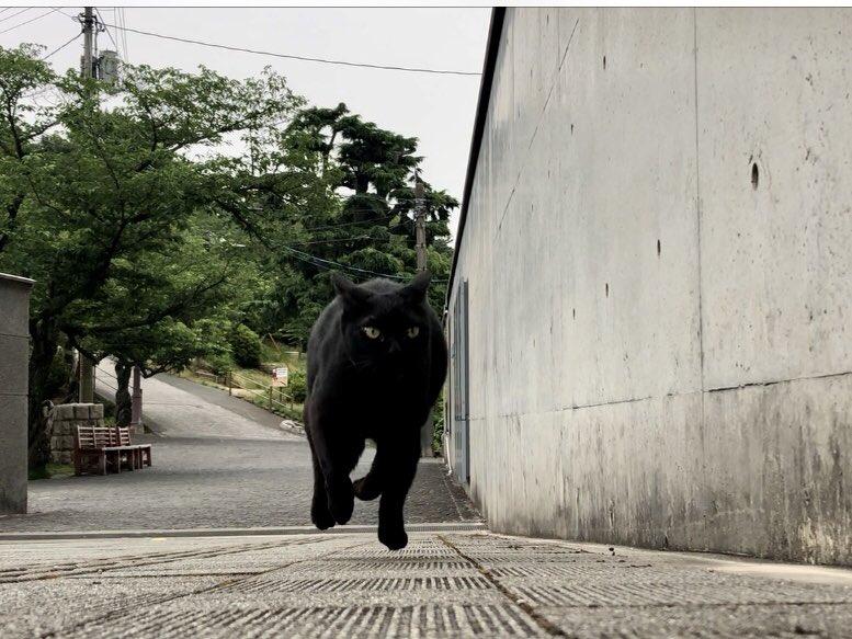 (静止画)ネコリンピック日本代表に推薦しますニャ。