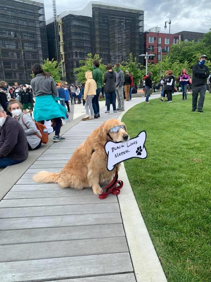 thread of very good dogs protesting for justice