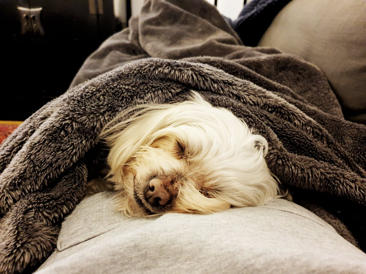 Having a super lazy Saturday with my girl #meandmyTao #Maltese #HumanPillow #Snoozle #DogsLife #DogsofTwitter #CuteDogs #CuteAnimals pic.twitter.com/CH6ODWXJPY