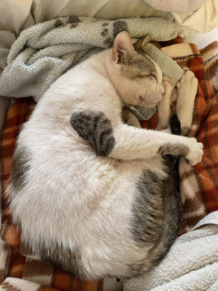 人にも猫にも時々勘違いされるのですが、保護活動をしているわけではありませんし、いつでもみなさんウェルカム〜(ニコニコ)っていうわけでもなく、できることなら見て見ぬ振りしたいけどそれをする強さがないんです。聞いてる?ずんさん。