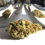 Image for the Tweet beginning: Bud Shots! 📷🌱  #brantcannabis #dispensary #cannabis