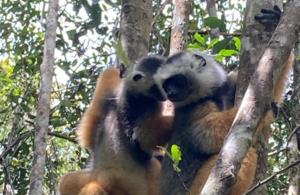 test Twitter Media - #Madagascar to benefit from lifeline for some world's most precious biodiverse habitats  https://t.co/mAJYj5dRZZ #Angola #Belize #Botswana #Cambodia #Cameroon #Congo #Ecuador #ElSalvador #Gabon #Government #Guatemala #Honduras #Laos #Namibia #Peru #UK #UKGovernment #Vietnam https://t.co/8gaQnsRVf3