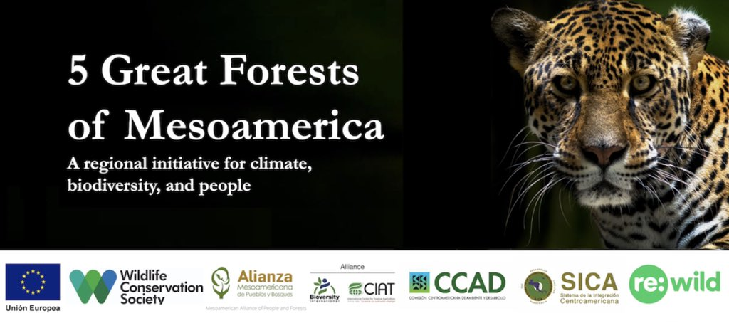 test Twitter Media - The five great forests 🌳 include the Maya Forest in Mexico, Guatemala 🇬🇹 , and Belize; the Moskitia in Nicaragua and Honduras; the Indio Maíz-Tortuguero in Nicaragua and Costa Rica; the Talamanca Region in Costa Rica and Panama; and the Darien inPanama and Colombia https://t.co/sN5pB92oib https://t.co/w8TiC7bmoj