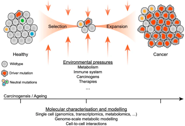 Very proud to share this editorial, co-written with the great @emanuelvgo, about the connection between metabolome and the genome in cancer. Comments are more than welcome. https://t.co/XpY5Ag65UV