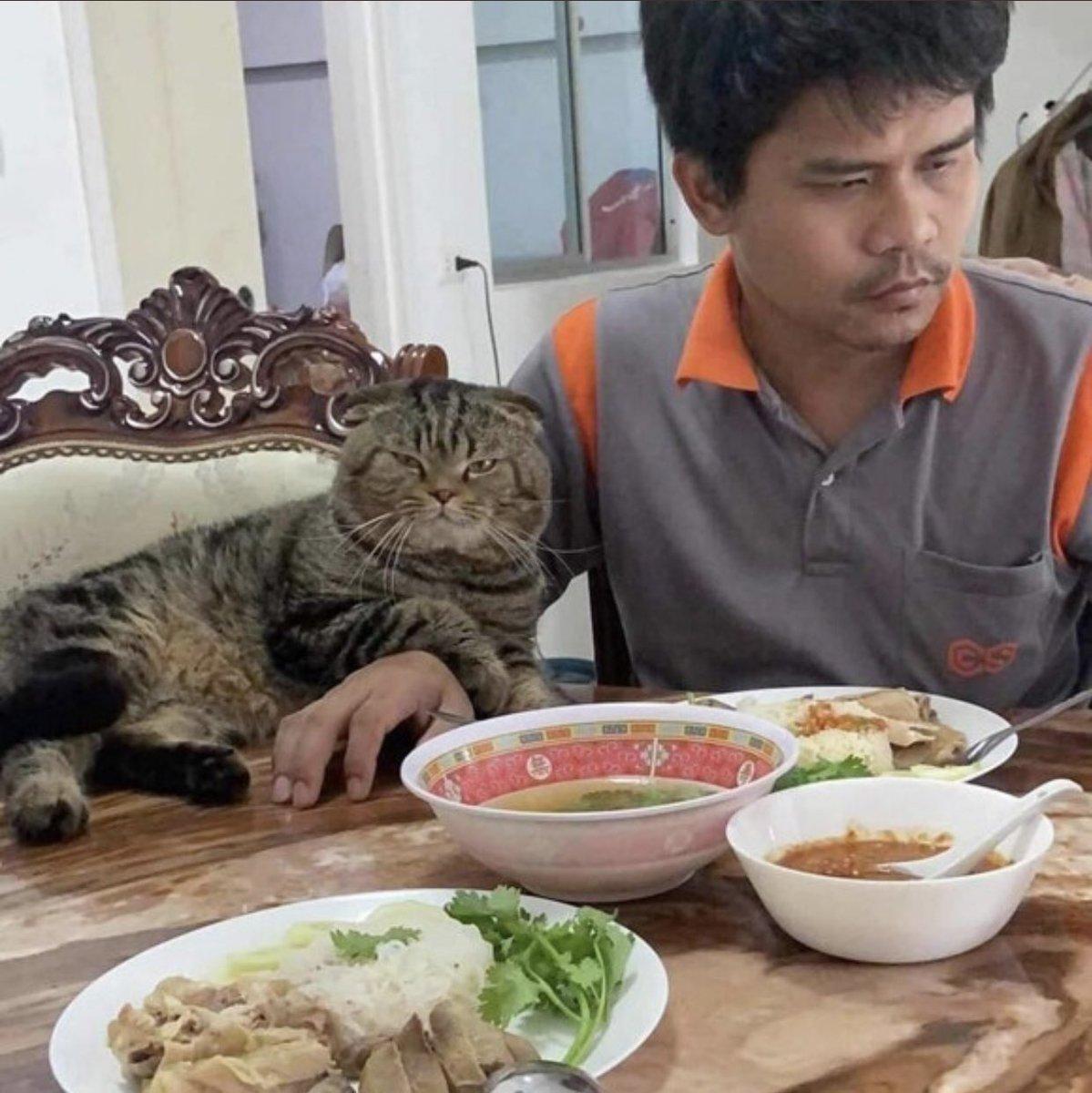 「猫に夫を奪われました」そう語る妻の嘆きを証拠写真と共にご覧ください 。
