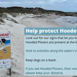 The first Hooded Plover chicks for the season are at a Port Neill beach! We are really excited but need help to protect them & get them to 35 days old when they can fly from danger. If you see these signs, please take note & help protect Hooded Plovers @AusLandcare  @envirogov