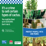 We've teamed up with Crime Stoppers NSW, @nswdpi and local councils to launch a new campaign to crack down on selling certain types of cactus 🌵  Help protect people, pets and parks by calling Crime Stoppers NSW on 1800 333 000 or report online https://t.co/i4oL7005kU