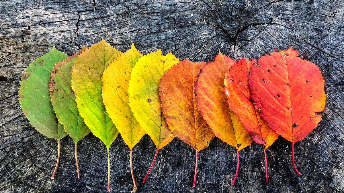 On this first official day of autumn, we thank God for the gifts of harvest and cooler days, for this season of coloured leaves and the beauty of God's creation all around us … Welcome, autumn! 🍁🍂