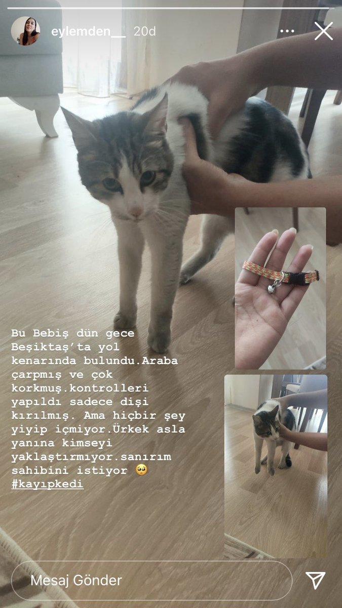 Beşiktaş'ta kayıp kedi bulundu. Sahipleri arıyor olabilir. @uzaylitosi @tursiko