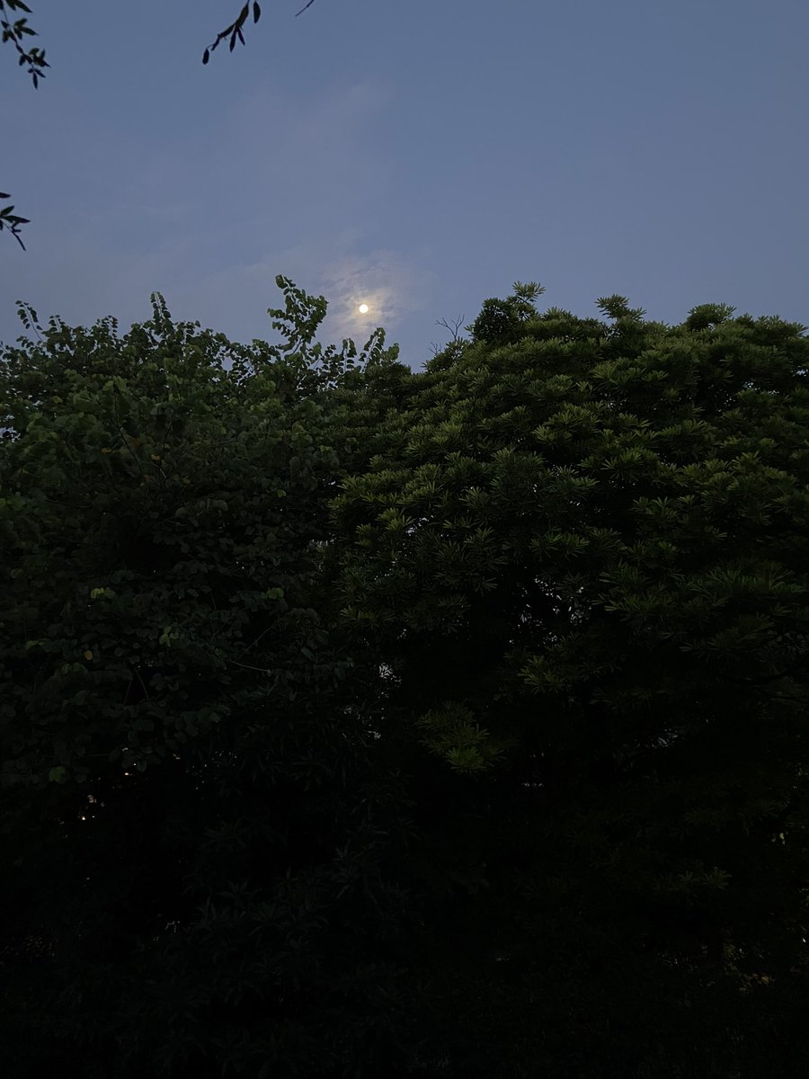 @sagarikaghose: Moonshine. From my 6 am run this morning .