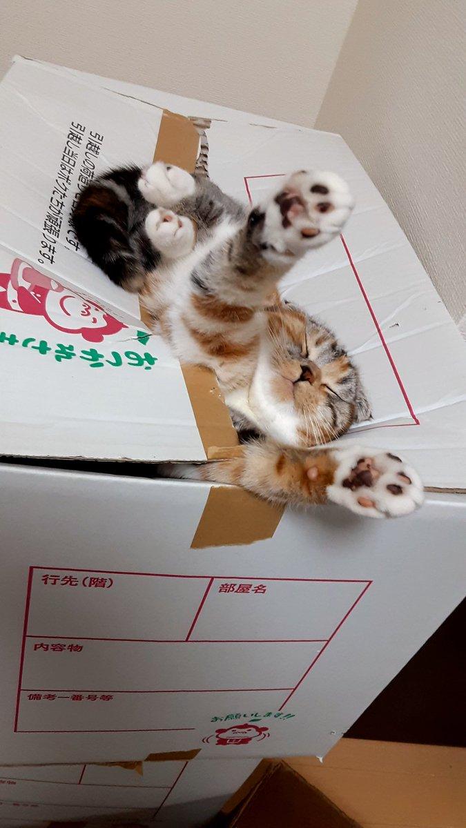 段ボールから何か出てる…。と思ったら、愛猫が爆睡してたw