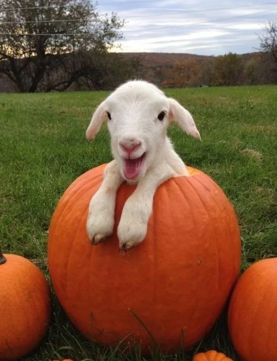 them: your love of the fall season is becoming truly obnoxious me: