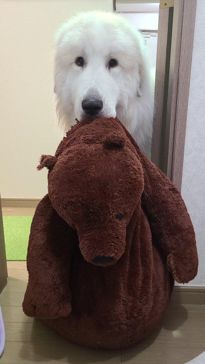 トイレでうんうん唸ってたら「大丈夫?クマしゃんいる??」っておっきいクマさん持ってきてくれて笑ってしまった🤣