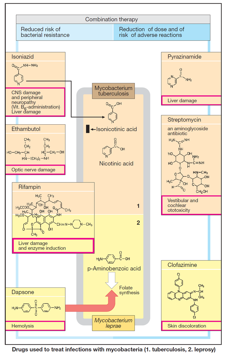✳️ Drugs for Treating Mycobacterial Infections  ⬇️ Read More :   👉 manualofmedicine.com/topics/pharmac…  #medtwitter #meded #foamed #usmle