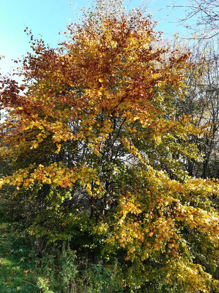 Have you started to notice the first changes in the colour of the leaves in Edinburgh. We would love to see your photos. You can help to look after our trees by supporting https://t.co/nD2U29fS5l #Edinburgh #trees #Scotland #nature