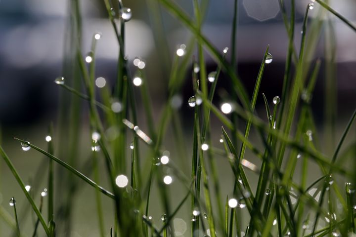 Featured Art of the Day: 'Dew drops on grass'. Buy it at: ArtPal.com/elygoldart?i=9…