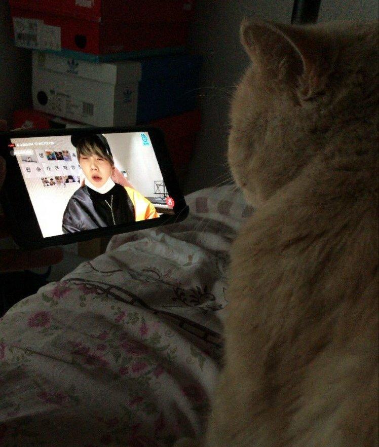 Yoongi Cat watching watching cat video Yoongi video
