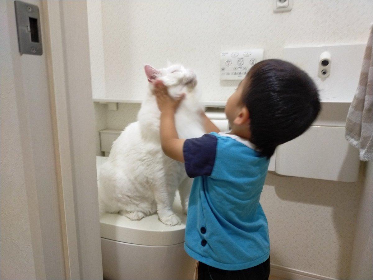 トヨちゃんがトイレを占領してて寝る前のトイレに行けない3歳児😆