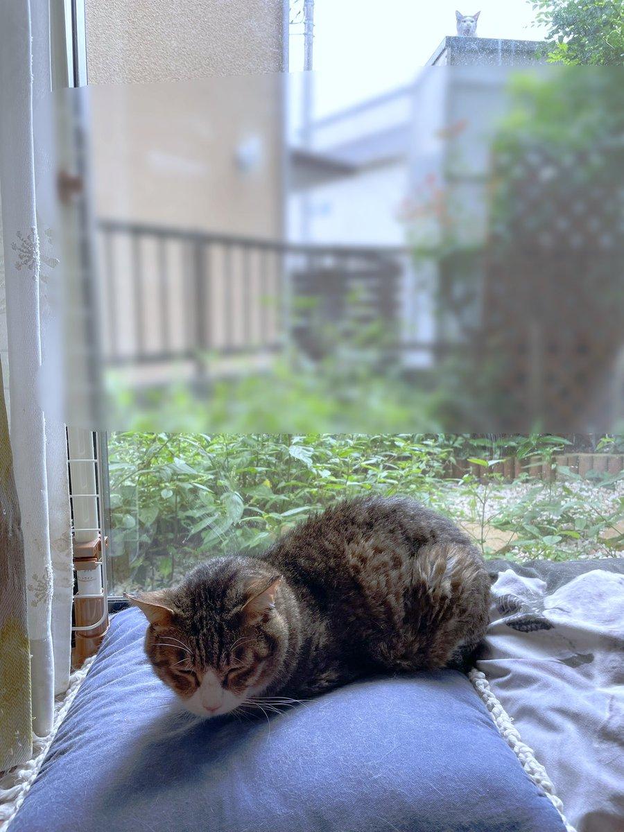 昼間に窓辺で微睡む猫を写した写真、よく見たら心霊写真みたいになっててローズヒップティー噴いた。おわかりいただけただろうか…。