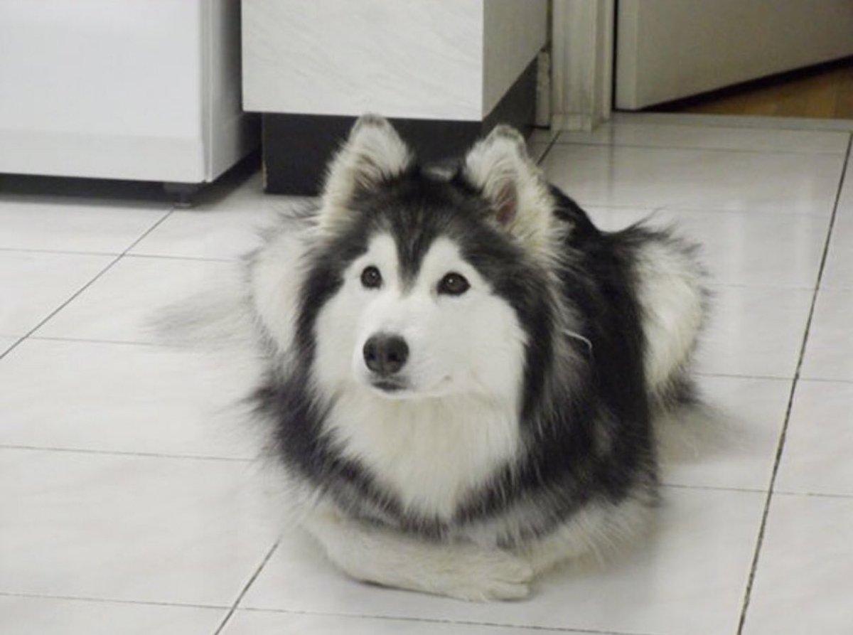 犬が猫に育てられると、仕草が猫になるようですw