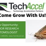 Image for the Tweet beginning: Hey, #entomologists! TechAccel is hiring