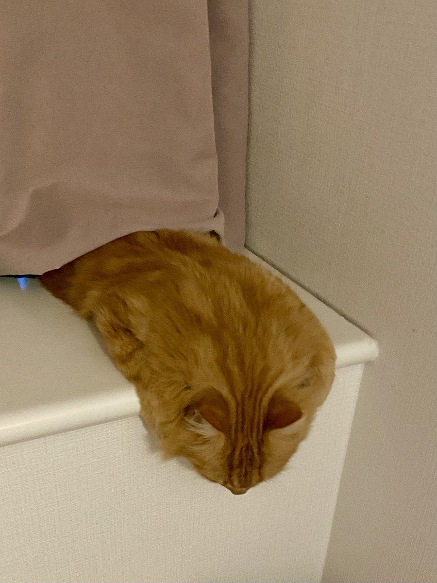 おっ。ダリの猫