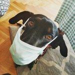 Por circunstancias personales, una buena amiga está buscando familia para Frida. Es una perra muy cariñosa, juguetona y sociable. Tiene cuatro años y mucho por vivir. Sufre epilepsia, pero con la medicación adecuada, puede llevar una vida totalmente normal. ¿Nos ayudáis con RT?