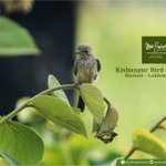 Image for the Tweet beginning: Beautiful and tiny birds find