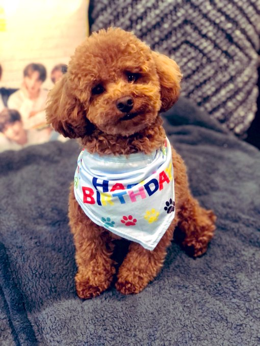 Happy 1st Birthday to my fluffy virgo baby, TaeTae!!  I can t believe he s a big boy already