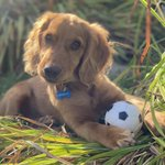 """Image for the Tweet beginning: """"May I have that ball?"""" """"No."""""""