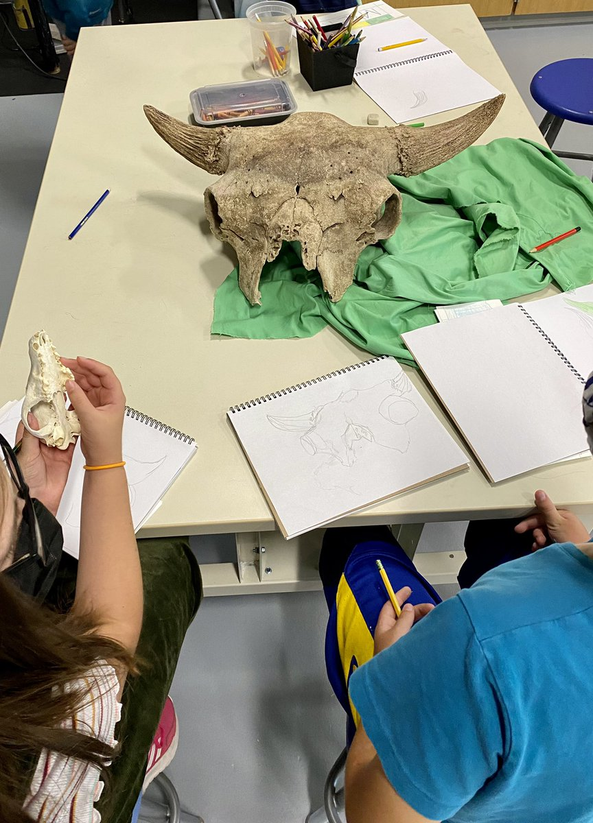 Drawing from observation in the art room, so many great questions and amazing focus on these beautiful skulls. How big IS a bison's brain? <a target='_blank' href='https://t.co/RlKfWc9US9'>https://t.co/RlKfWc9US9</a>