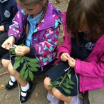 Image for the Tweet beginning: Beech class were concentrating really