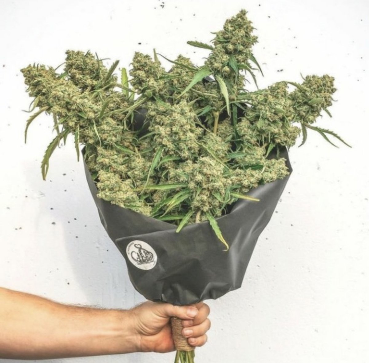 TheSalesJoint: Our growers are all about bringing you flower!  Learn more about the premier sales connection for dispensaries & cultivators by visiting us on-line at The Sales Joint!  Stay Lit. 🔥   #thesalesjoint #cannabisindustry