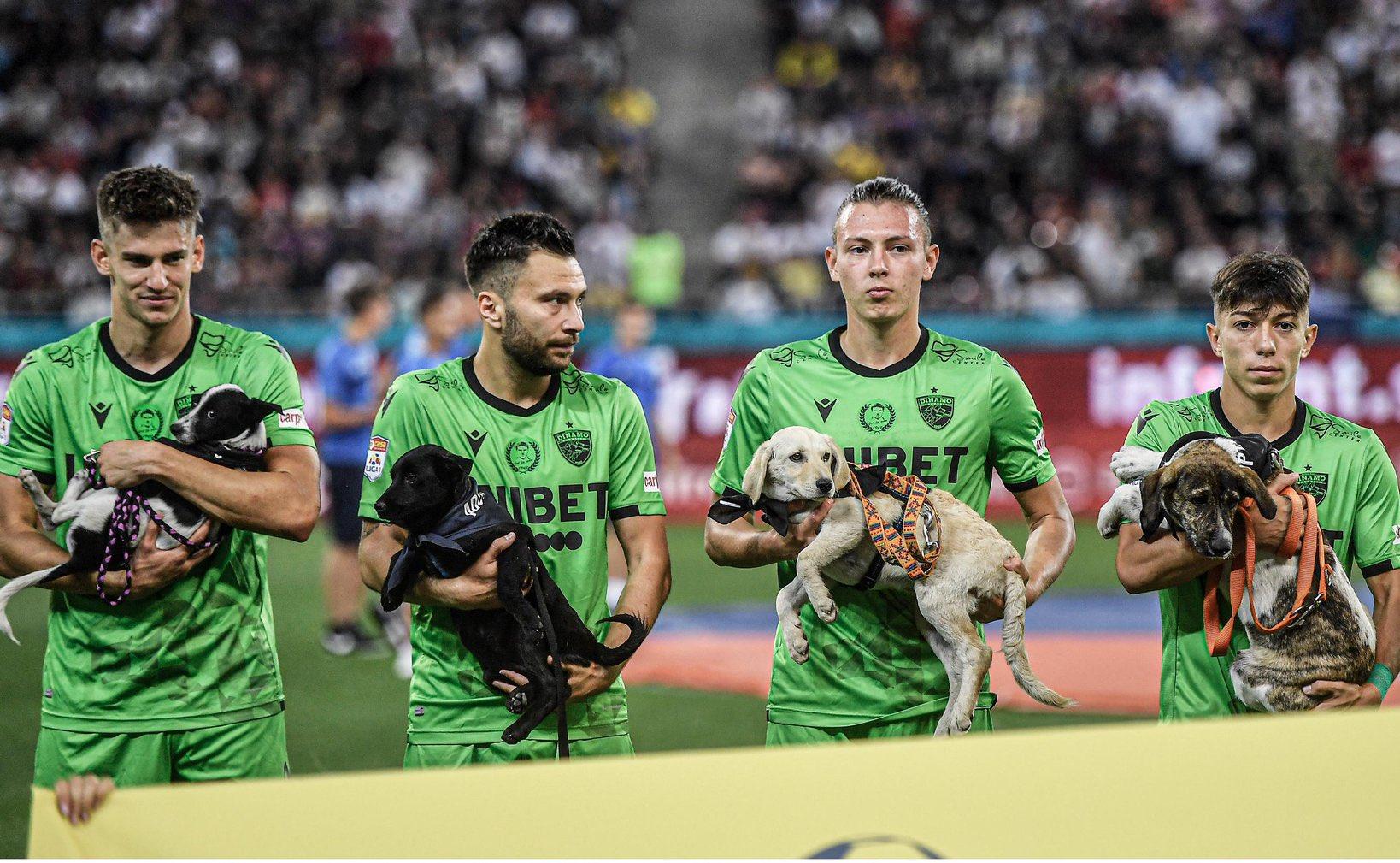 Futbolistas de Rumania promueven adopción de perritos en partidos -  Mediotiempo