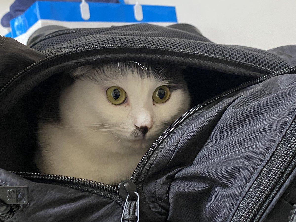 間違って現場に連れてったらどんすんだこのやろー!!!このバッグ入り娘が!!!!