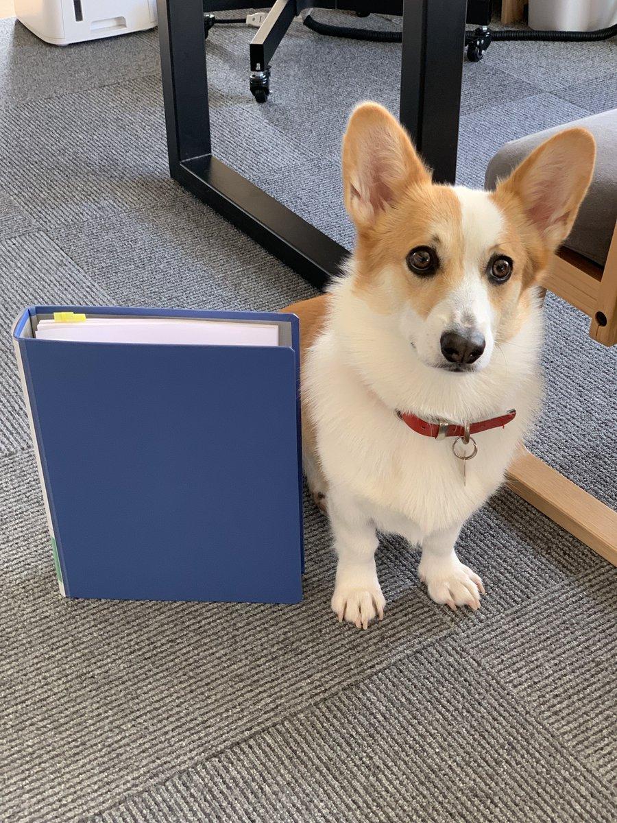 管理組合に「犬の大きさの分かる写真を出してください」と言われたので