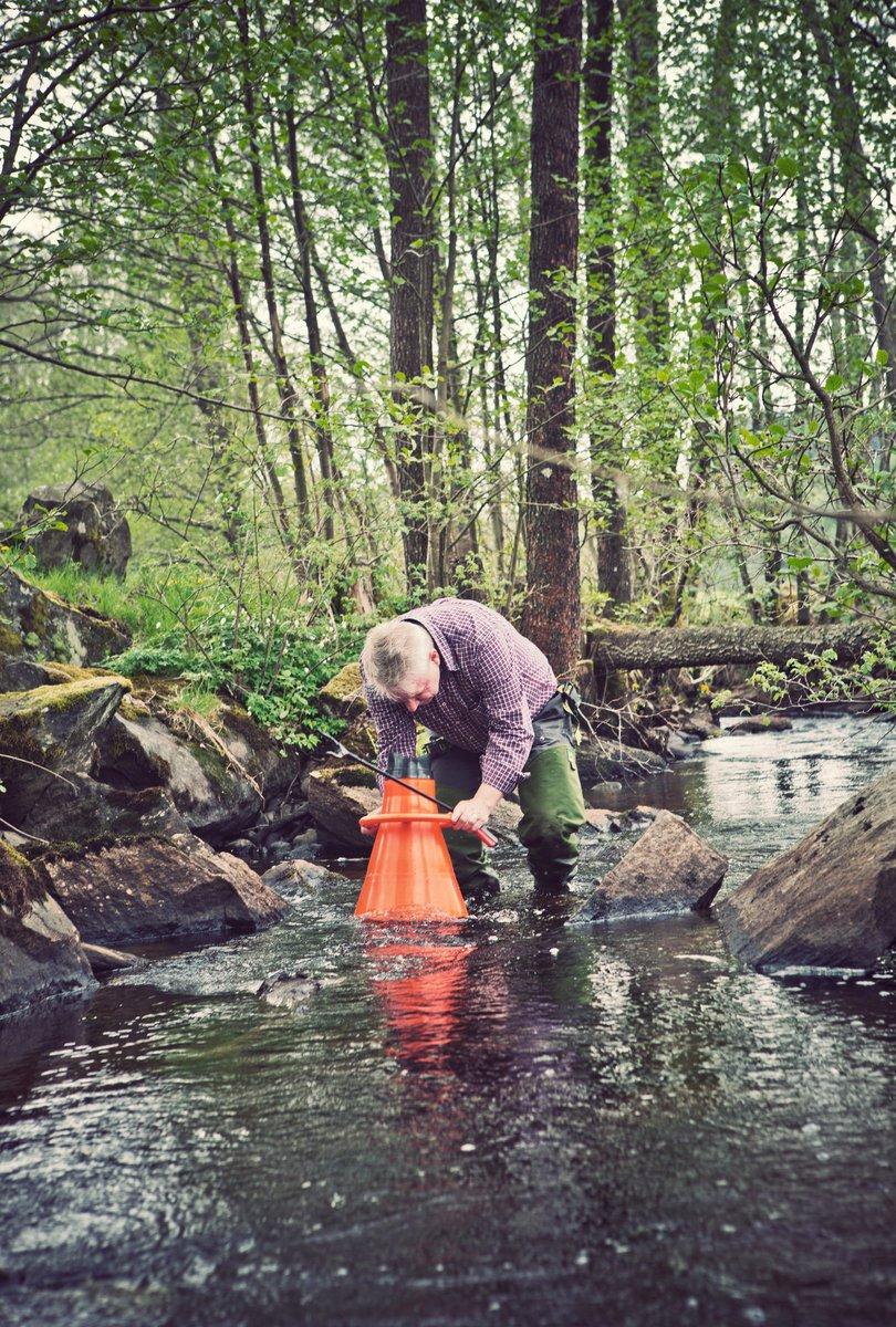 Ett sexårigt EU-projekt ska återuppliva bestånden av den starkt hotade #flodpärlmusslan genom att förbättra deras livsmiljöer i Finland, Sverige och Estland. @havochvatten största svenska medfinansiären. https://t.co/96Qc8iNf0l #biologiskmångfald https://t.co/RDVjpm5a50